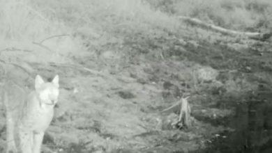 Photo of Бурабайда сілеусін фототұзаққа түсіп қалды